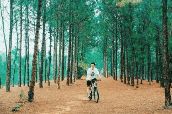 Rừng thông Đại Lải